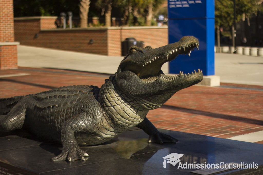 University of Florida gator